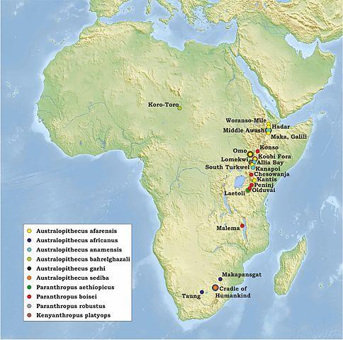 アフリカ猿人地図