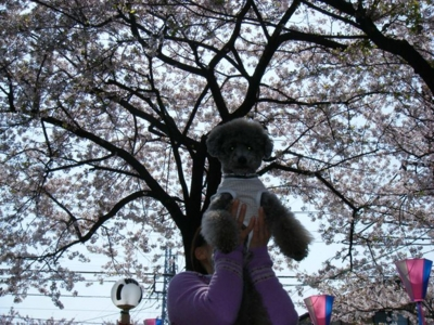 2010-04-17
