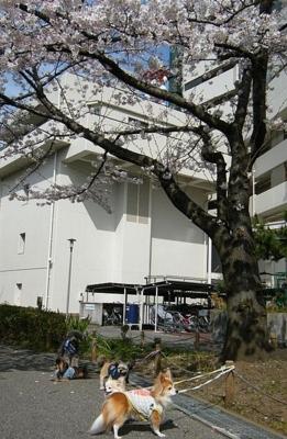 2011-04-15