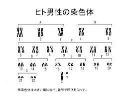 f:id:disa-japan:20161114170633j:image