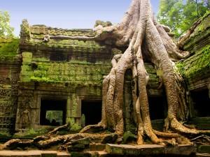 Ta Prohm Dschungel Tempel