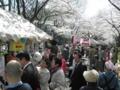 平沢勝栄|第16回葛飾花まつりに参加|2012年4月8日