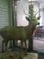 front of the supermarket. stuffed deer.