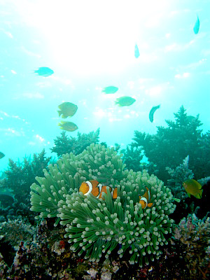 f:id:diveseaforest:20190401092836p:plain