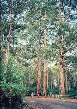 f:id:diveseaforest:20190402192856j:plain