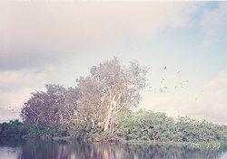 f:id:diveseaforest:20190402212132j:plain