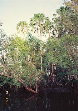 f:id:diveseaforest:20190402212218j:plain