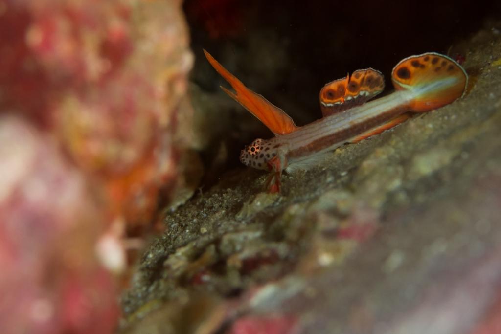 f:id:divinglife:20140926163810j:plain