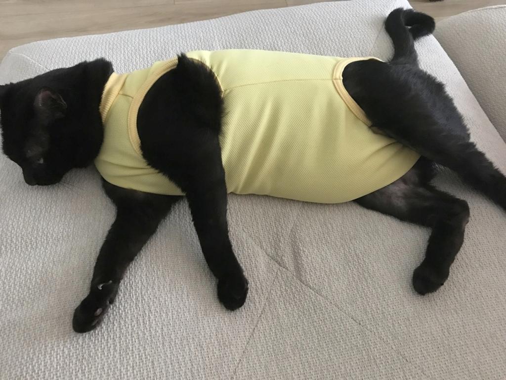 エリザベスウェアを着た黒猫