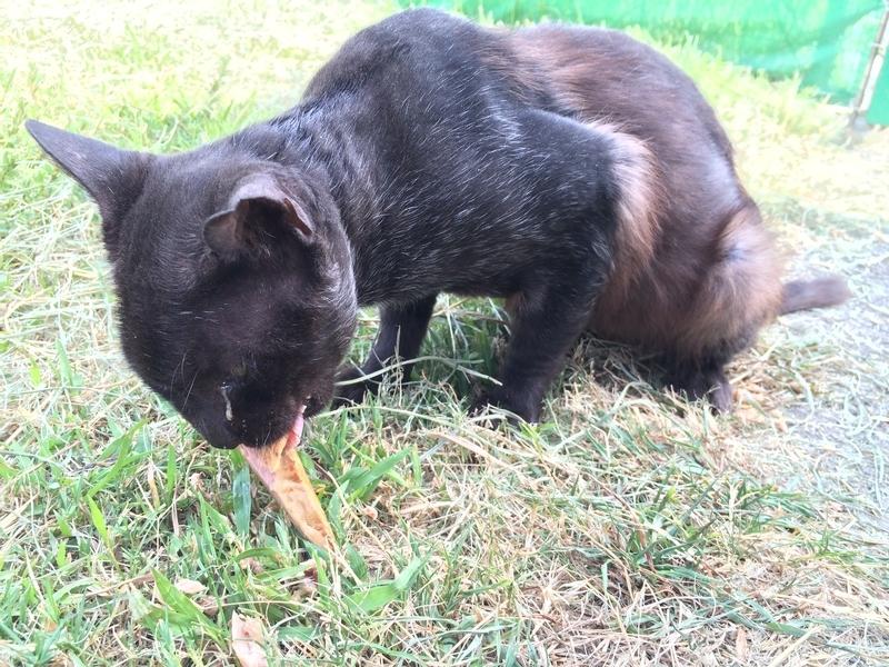 疥癬が治った猫