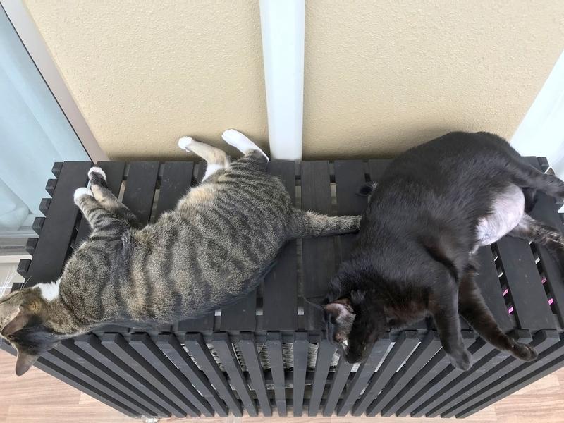 室外機カバーと猫