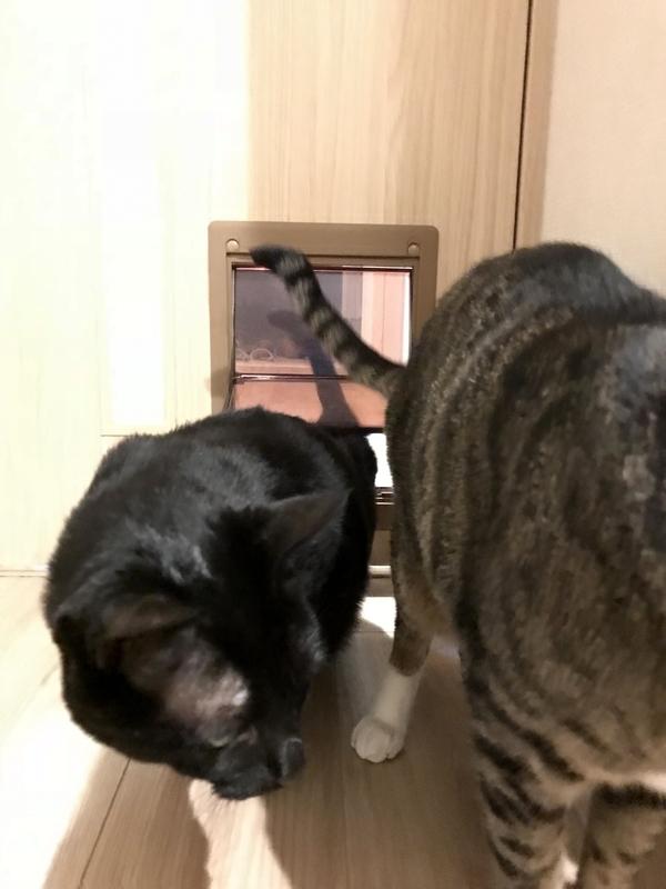マンションの猫用ペットドア