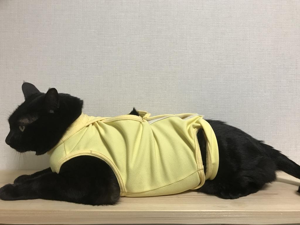 エリザベスウエア術後服を着る黒猫