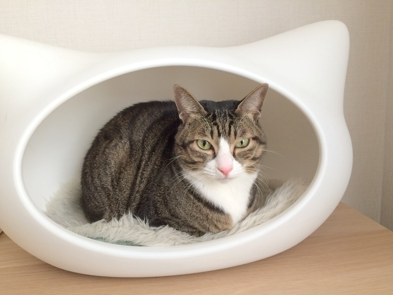 猫型ベッド『ねころん』