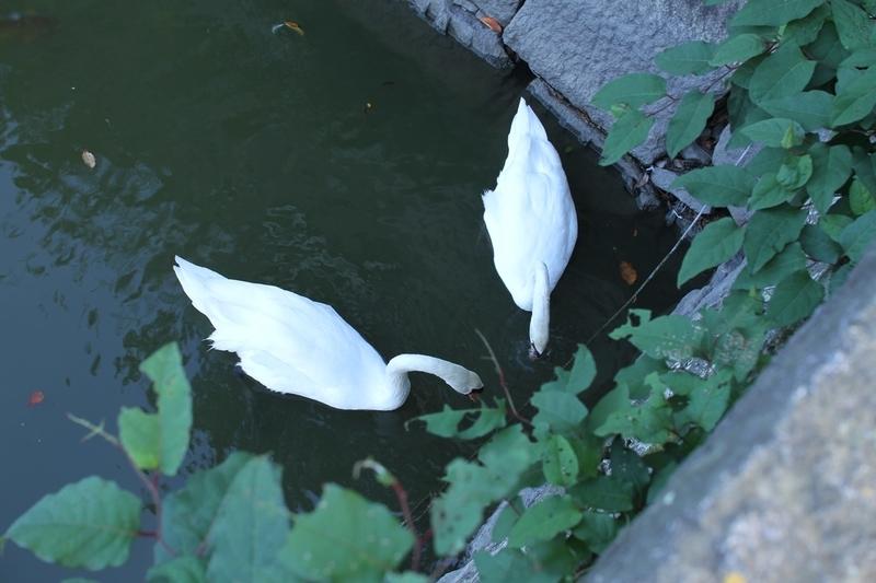 丸亀城白鳥