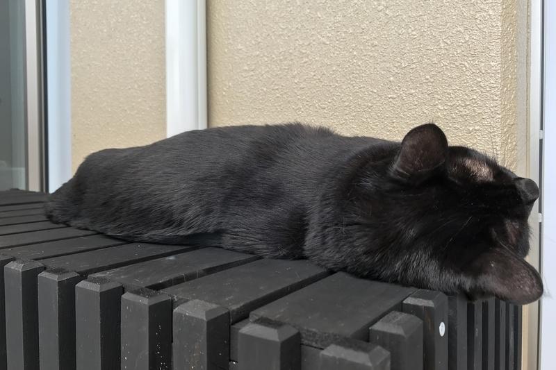 猫の語源は寝子