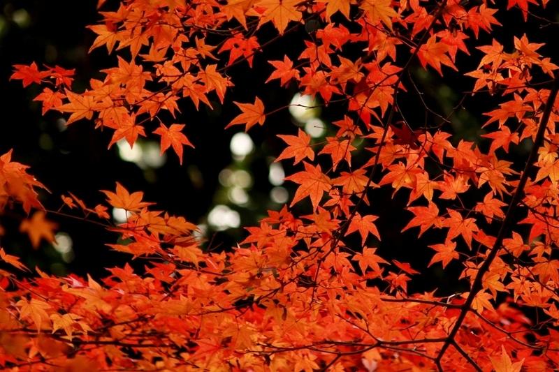 天龍寺の紅葉