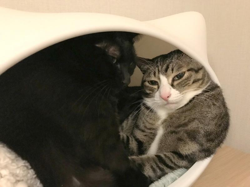 猫たちのポジション争い