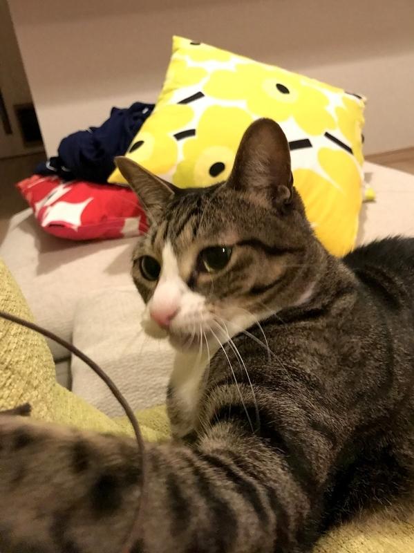 猫の変顔写真