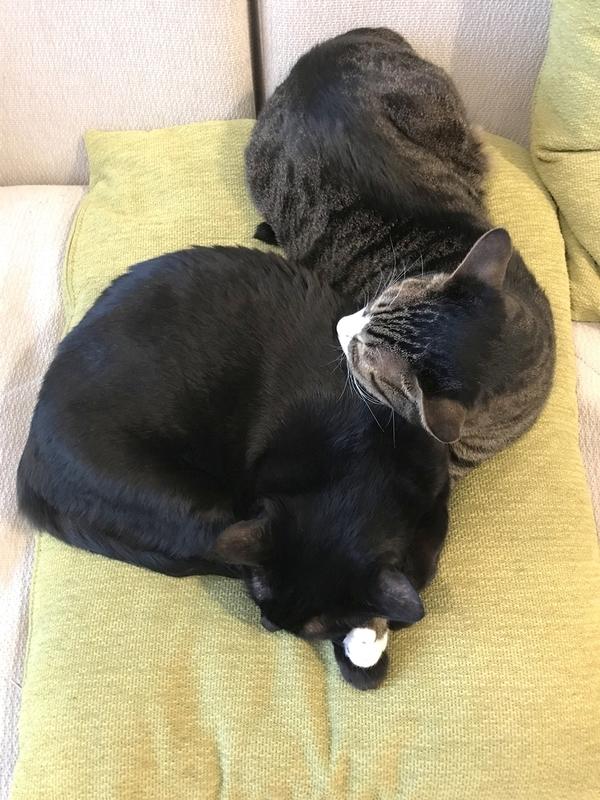 腕枕する猫