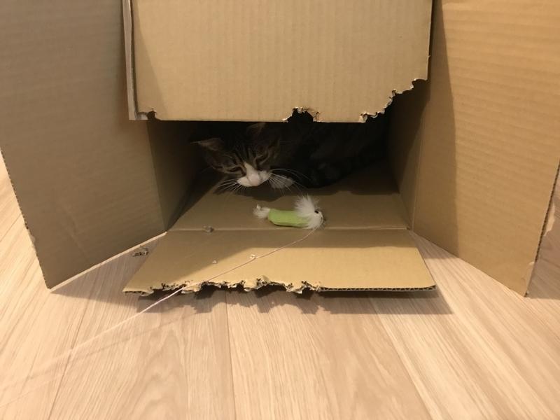 やる気なく遊ぶ猫