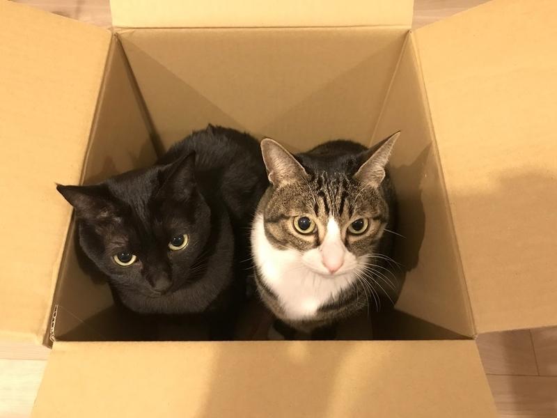 猫の箱詰め