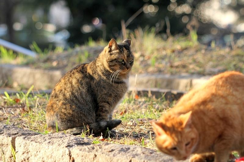 冬の野良猫(地域猫)