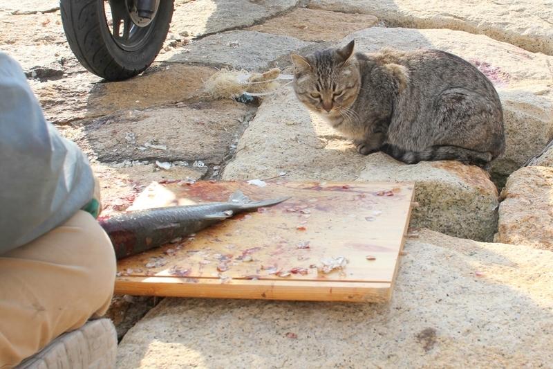 釣り人と猫