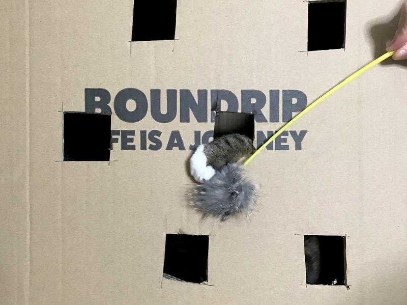 段ボール箱で簡単DIY!逆もぐら叩きで遊ぶ猫