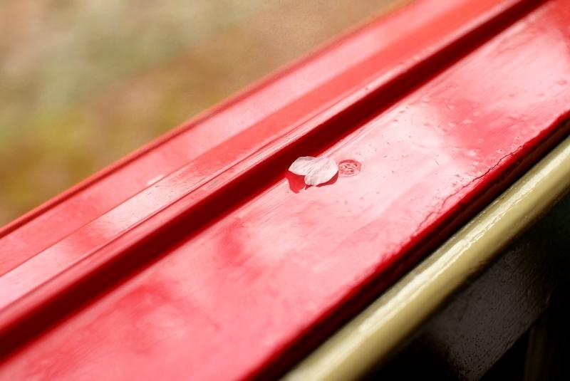 【京都・嵐山&亀岡】嵯峨野トロッコ列車で保津峡の桜を眺める