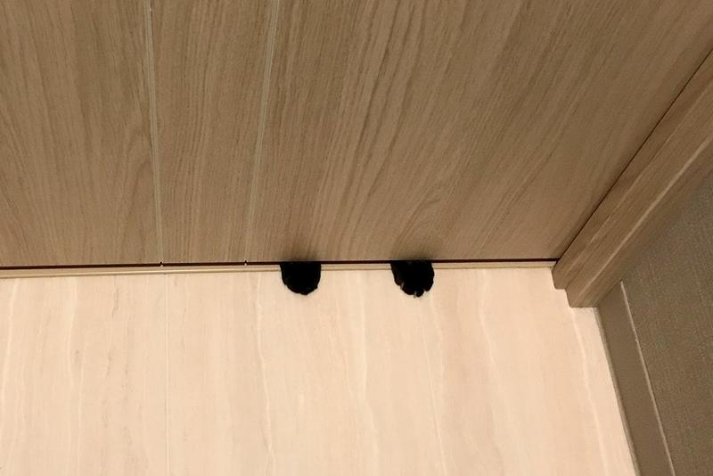 恐怖…トイレのドアの隙間から伸びる黒い手
