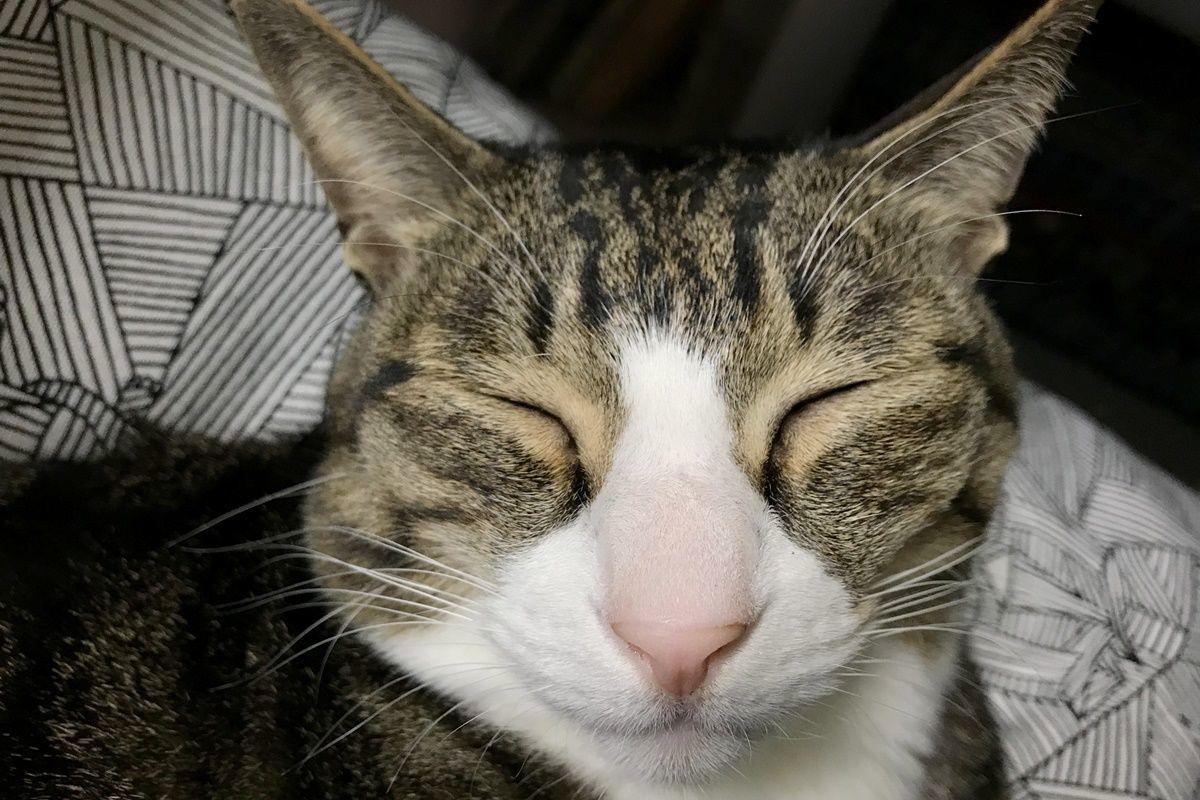 ヘアアレンジ!前髪で遊ぶオシャレ猫