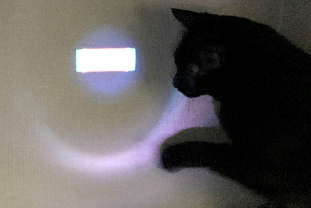 CIAOちゅ~るのオマケに猫用LEDポインターをGET!
