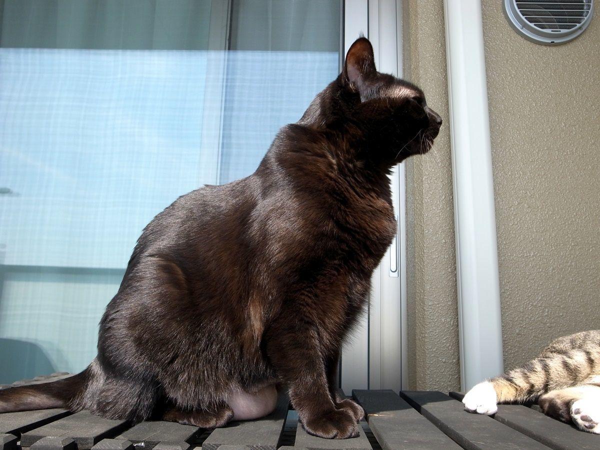 【猫の舐めすぎハゲ対策その8】アトピカを4ヵ月半毎日飲ませた時点の効果