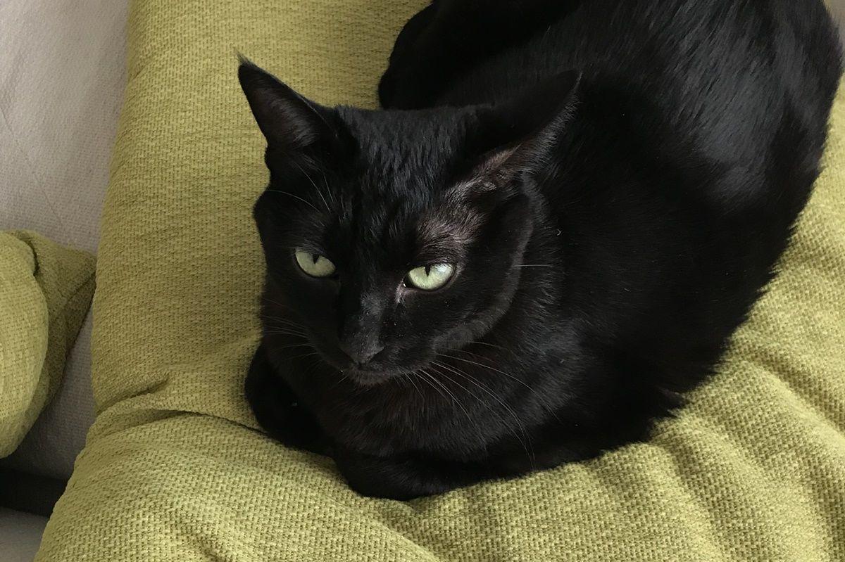 【ベランディングその2】夏場の猫はサウナのオッサン