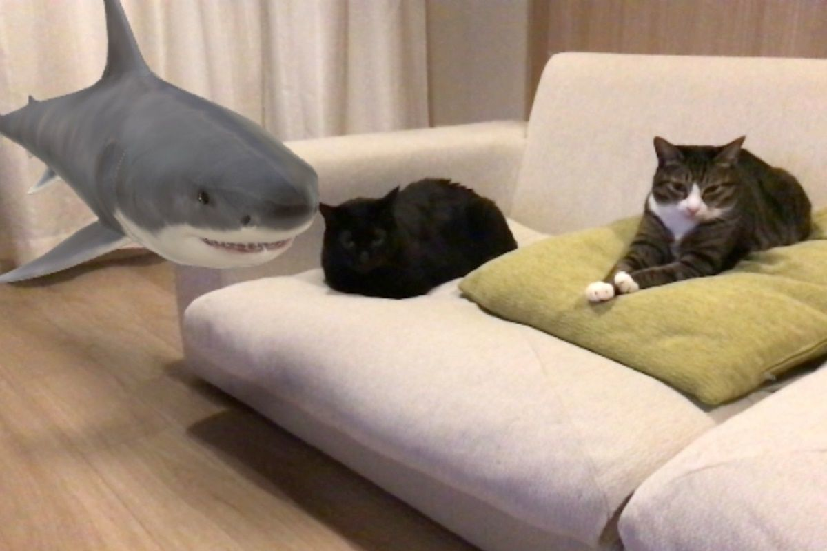 【Google検索】動物ARで3Dの猫を召喚!本物の猫と並べてみました