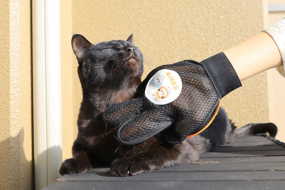 初めてグルーミンググローブを体験した猫たちの様子