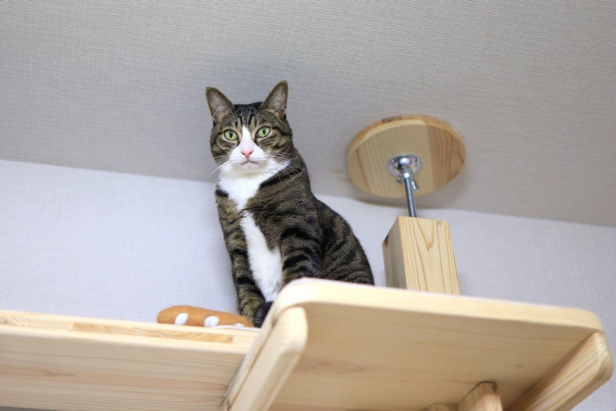 【うちの猫用品・家具編】キャットタワー『スヌーズ』・猫型ベッド『ねころん』など