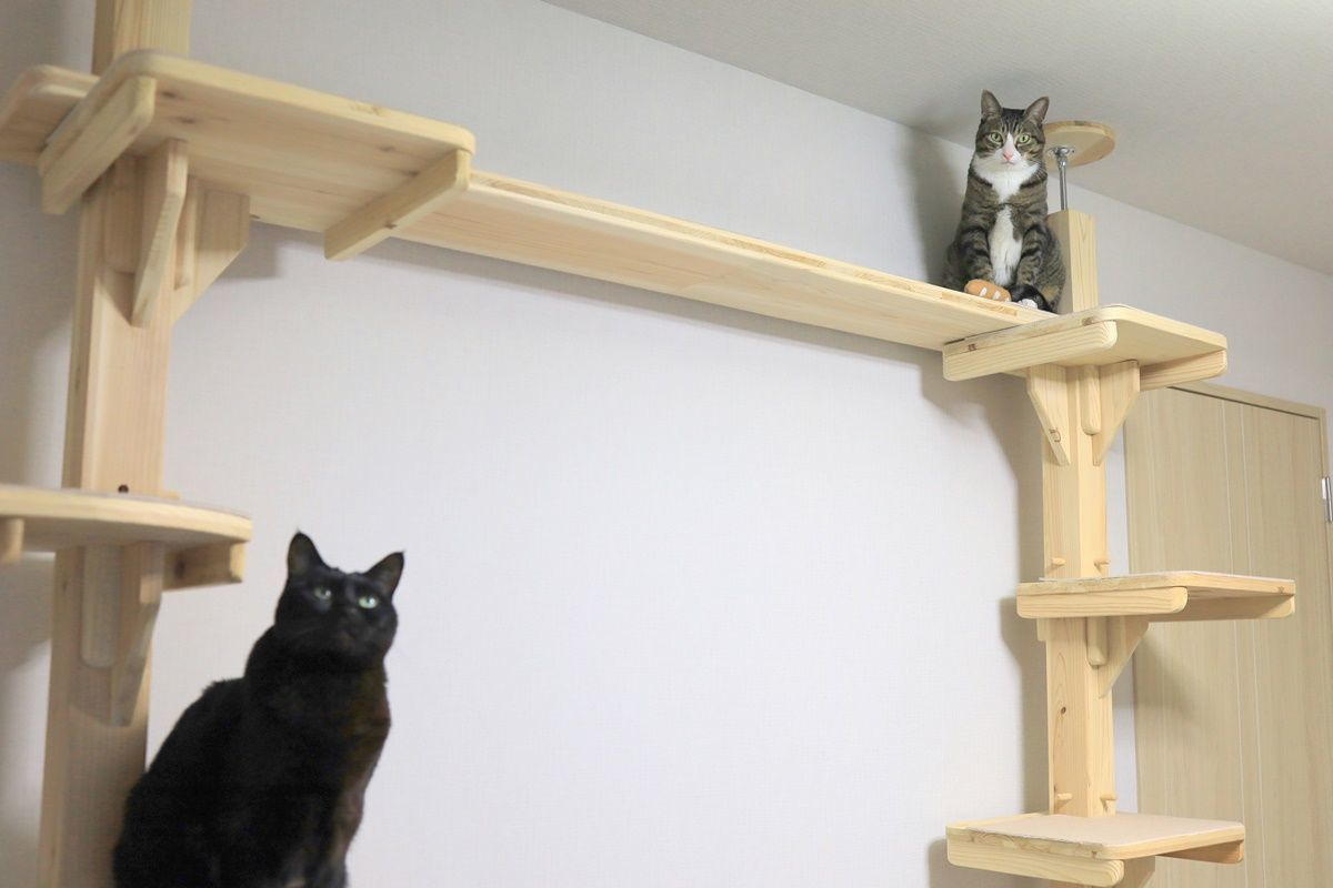 木製キャットタワー『杉にゃん』で壁一面キャットタワーを実現!