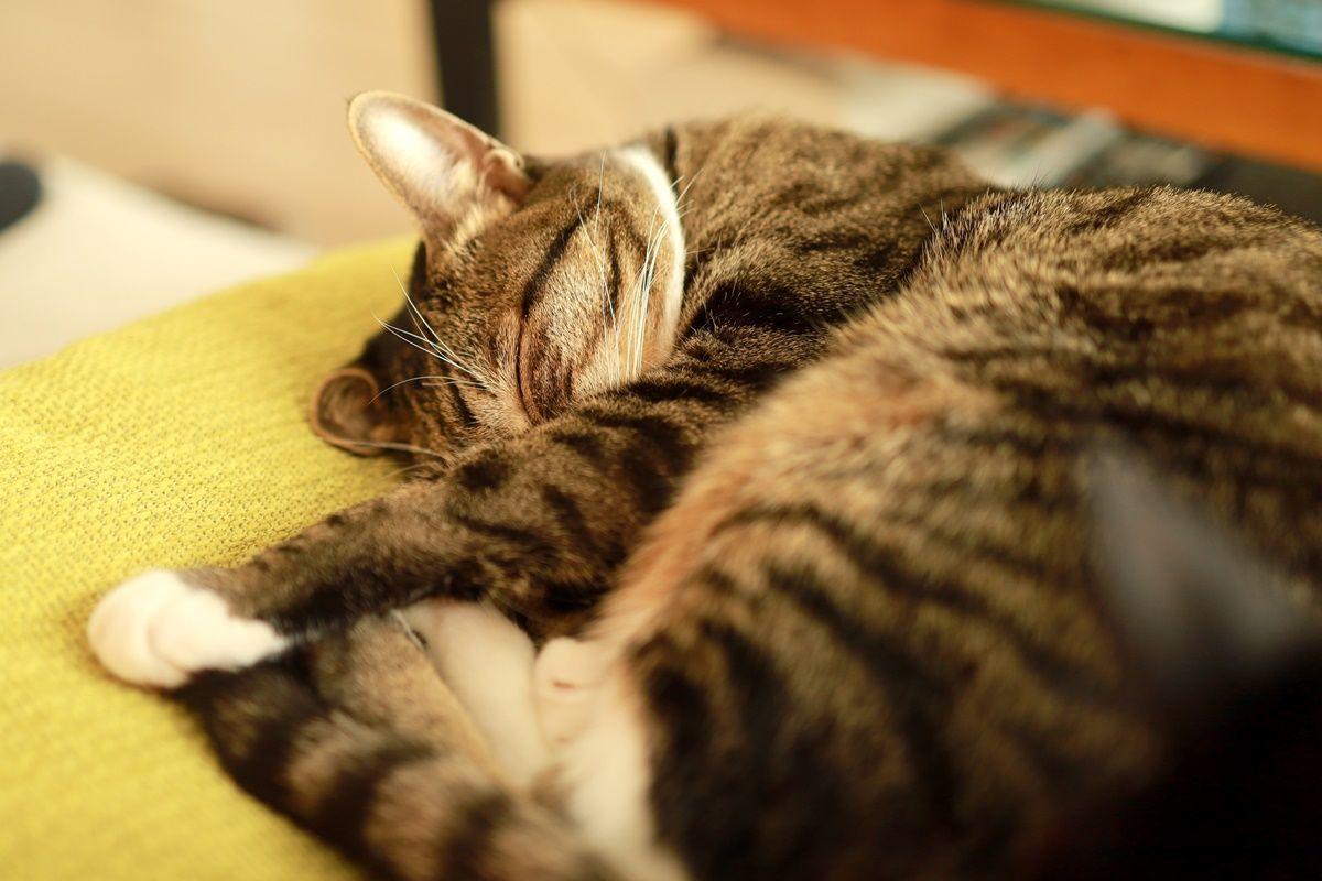 ちょっと笑える、小さくて可愛い猫の前歯