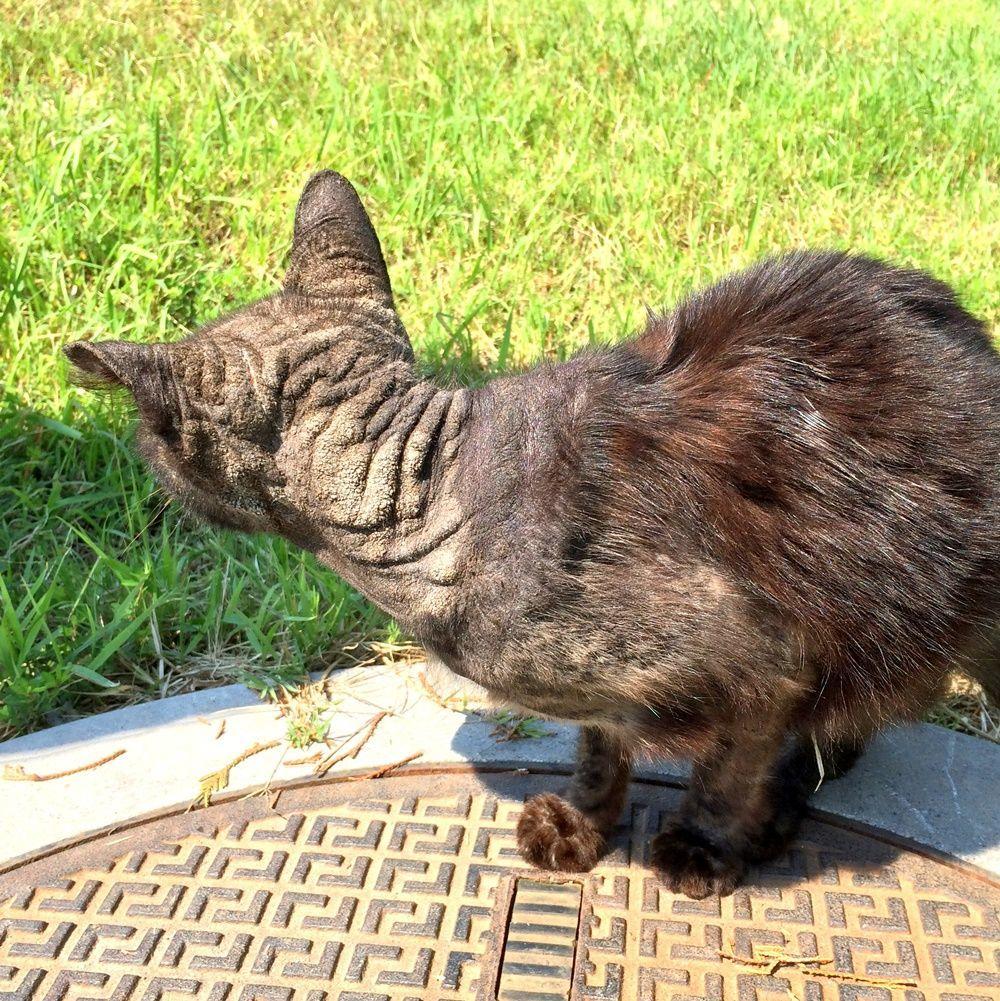 野良猫の疥癬(かいせん)をストロングホールドという薬で治療した時の話