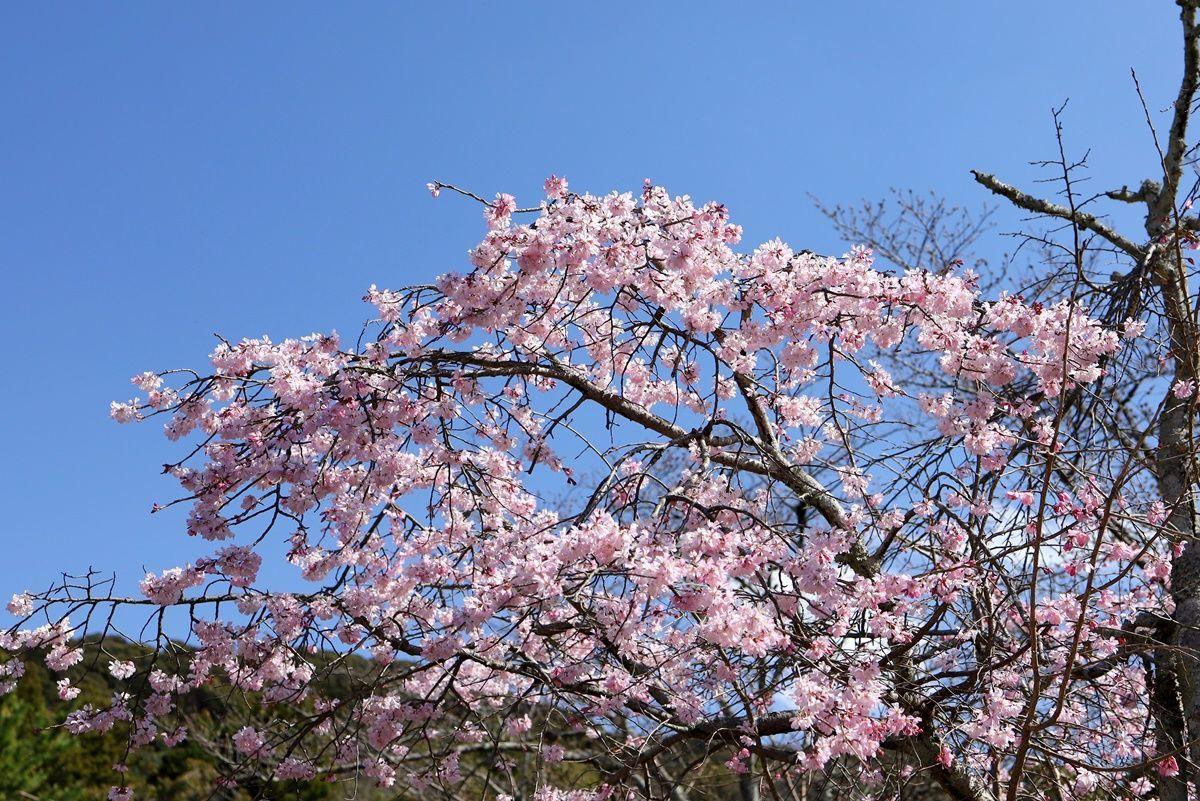 【京都・祇園】八坂神社で疫病除け祈願&『お茶漬処ぶゞ家(ぶぶや)』11種類の漬物ランチ