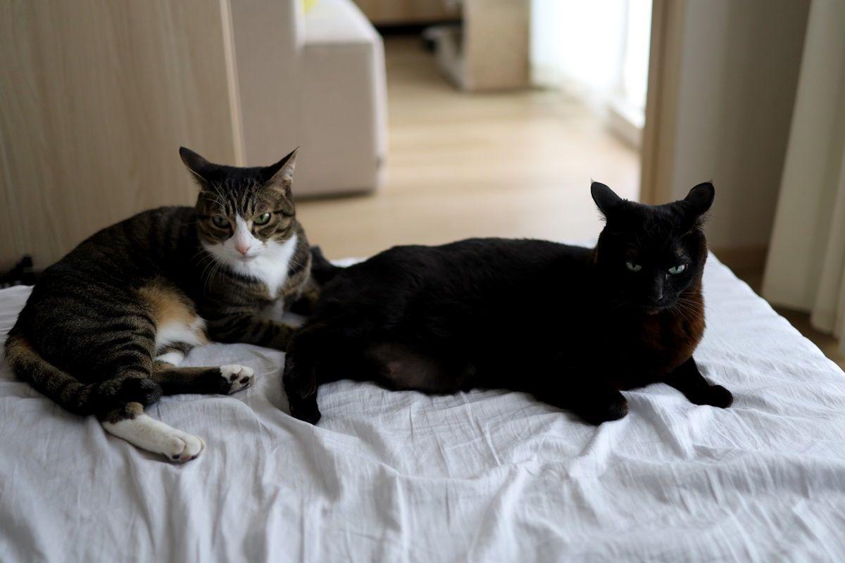 【猫の舐めすぎハゲ対策その10】完治まであともう少し!