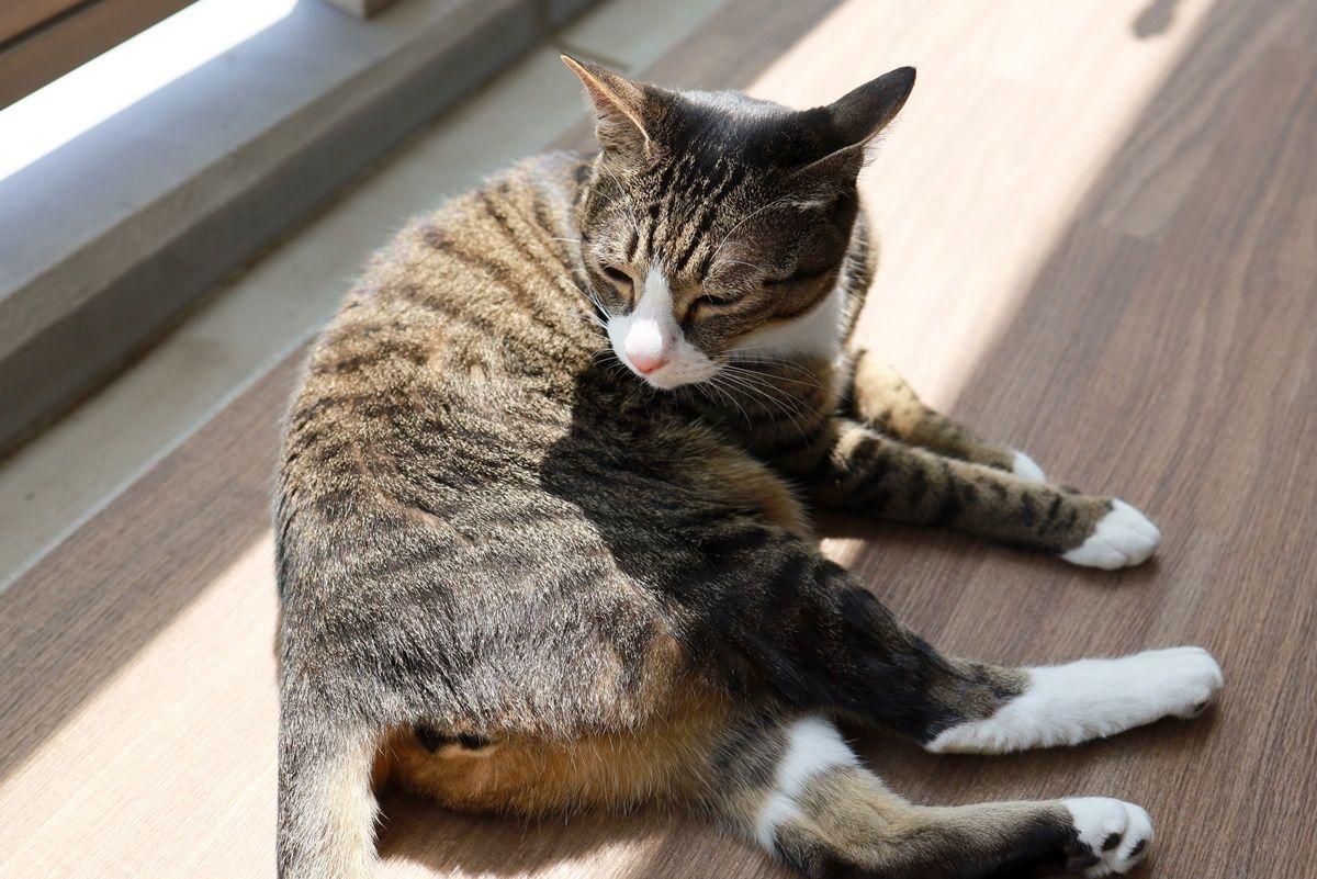猫用フェロモン製品フェリウェイスプレー&スマックまたたびスプレーの効果