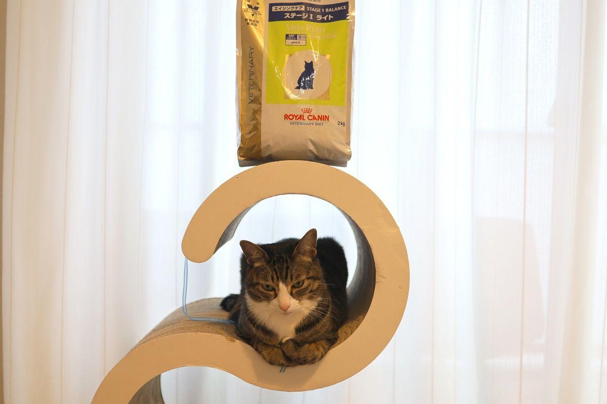 猫のダイエット!キャットフードを『エイジングケア ステージI ライト』に変えました