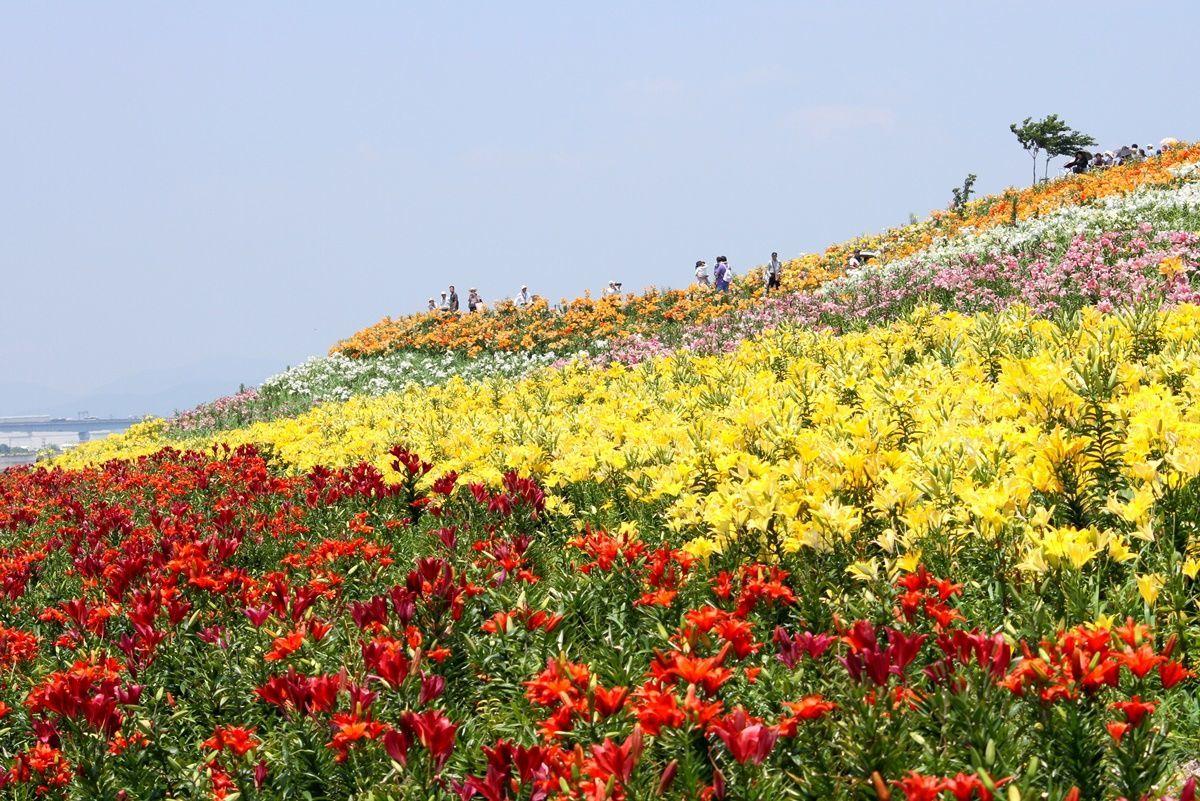 【大阪・舞洲】閉園した大阪舞洲ゆり園の写真