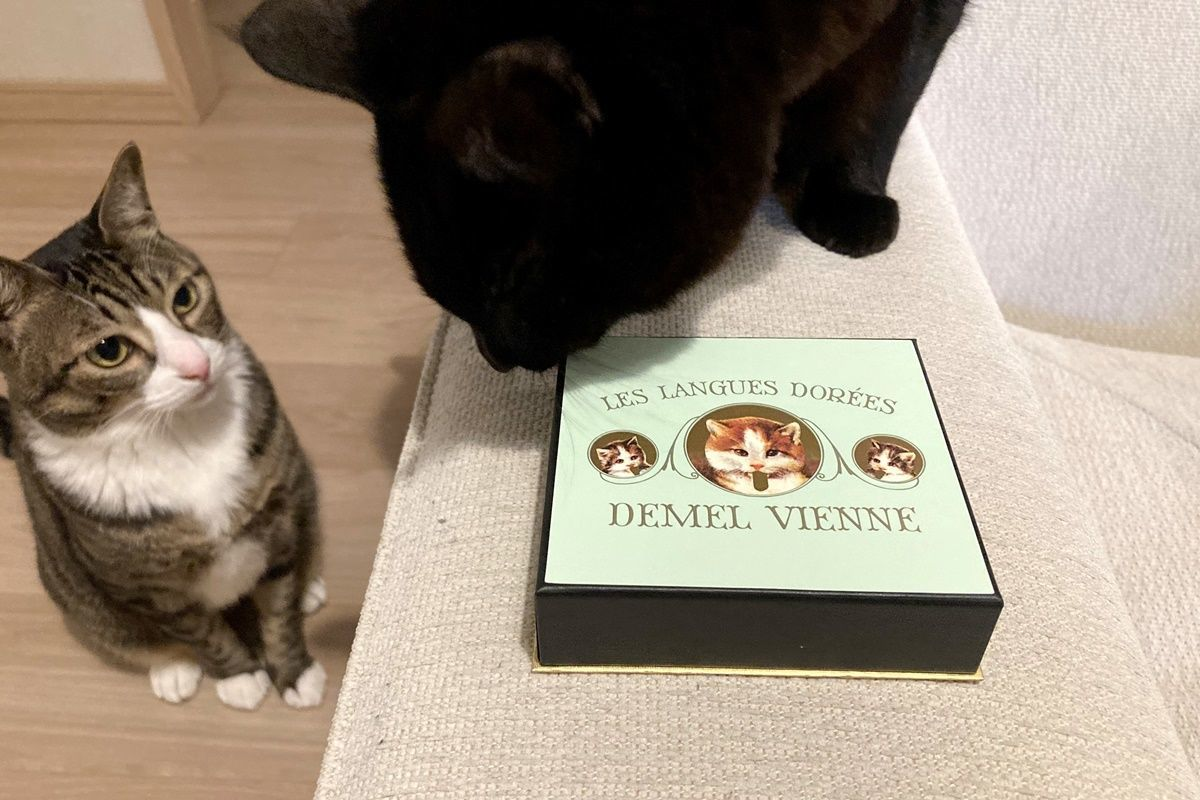 バレンタインに『デメル』の猫の舌チョコをもらいました