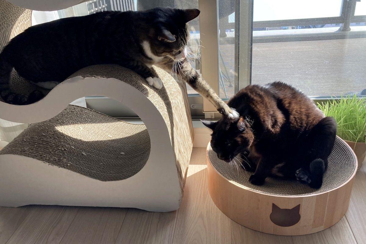 猫ベッドになる爪とぎ『猫壱 バリバリボウル』を購入
