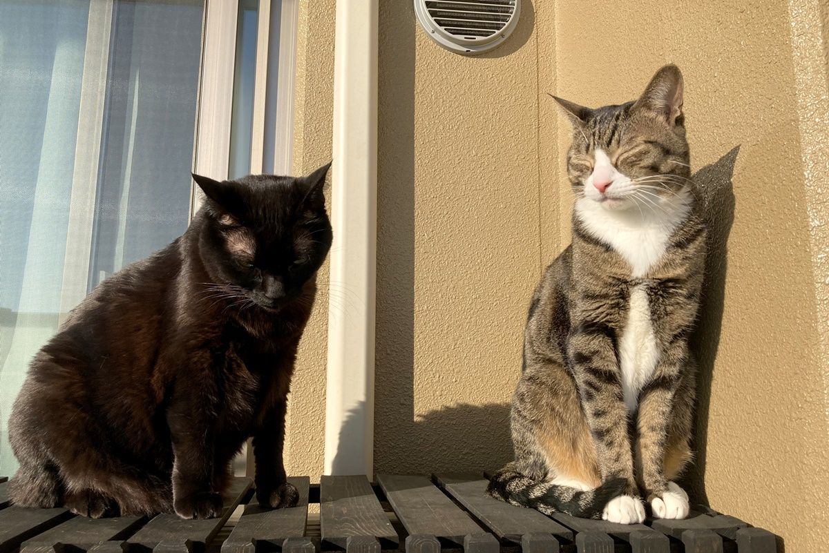 洗面台の掃除に最適!かわいい猫型ブラシを購入しました