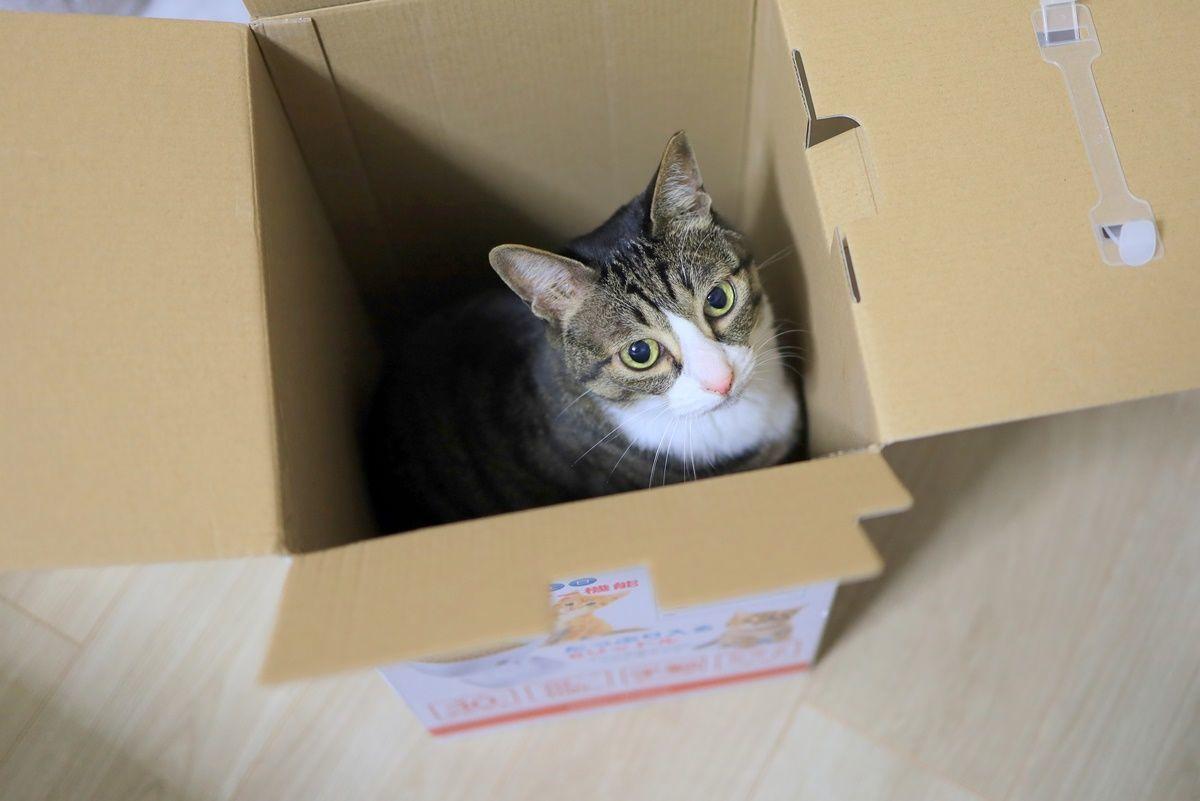 猫の自動給餌器をスマホ対応の『チャオポリス』に買い替えました